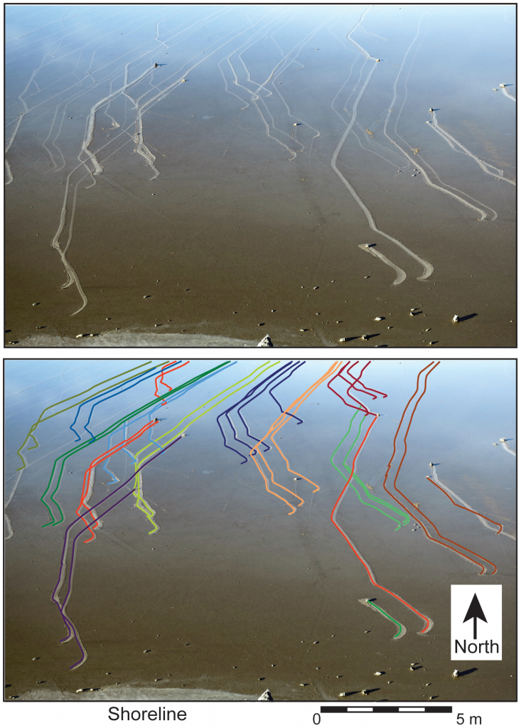 ภาพแสดงทิศทางการเคลื่อนที่ของก้อนหินทีขนานกัน Image  credit doi:10.1371/journal.pone.0105948.g002