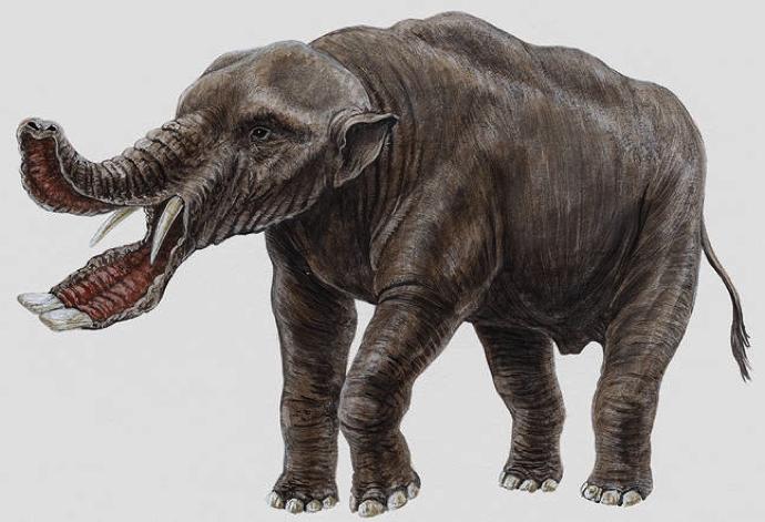 รูปภาพจาก http://dinosaurs.wikia.com/wiki/Platybelodon