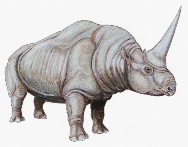 รูปภาพจาก http://en.wikipedia.org/wiki/Elasmotherium