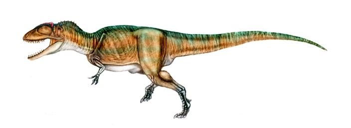 รูปภาพจาก http://unlobogris.deviantart.com/art/Carcharodontosaurus-23172842