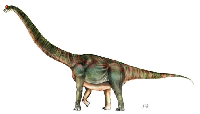 รูปภาพจาก http://unlobogris.deviantart.com/art/Brachiosaurus-altithorax-23846788