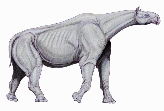 รูปภาพจาก http://en.wikipedia.org/wiki/Paraceratherium