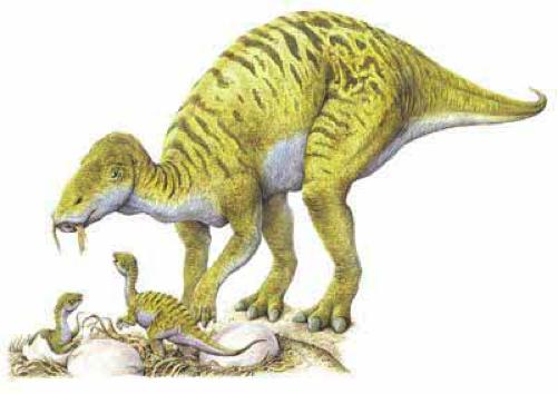 รูปภาพจาก http://historum.com/natural-environment/42181-dinosaur-renaissance-2.html