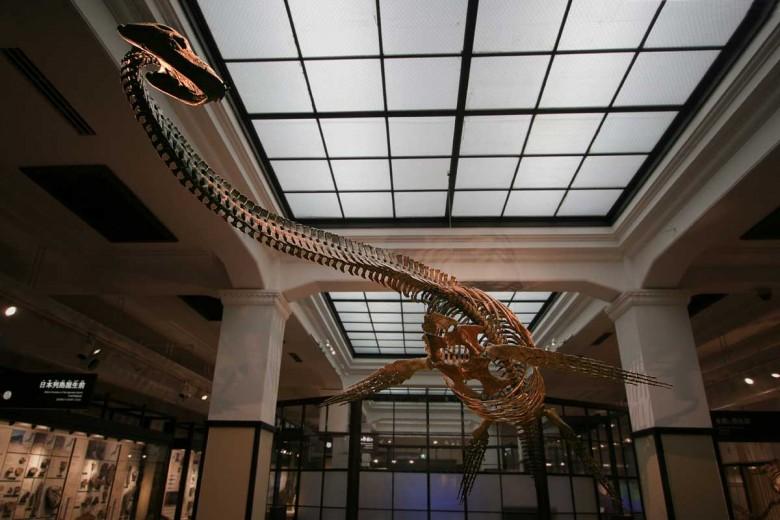 ทำไมเพลสิโอซอร์จึงไม่จัดว่าเป็นไดโนเสาร์